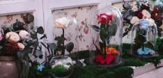 Le cadeau parfait de la rose éternelle sous cloche
